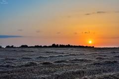 Sunrise after harvest, summer 2018 (Peideluo) Tags: sun sunset sunrise nature campo cosecha cielo sol