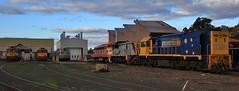 G527 G525 Hitachi B65 T369 and XR555 all take up room at North Bendigo workshops (bukk05) Tags: g527 g525 b65 t369 xr555 gclass bclass tclass xrclass hitachi emd16567bc emd16645e3c emd8567cr jt26c2ss g8b ml2 emd16645f3b gt26c3 explore export engine electromotivediesel railway railroad railpage rp3 rail railwaystation railwaystations train tracks tamron trains tamron16300 yard photograph photo pn pacificnational loco locomotive horsepower hp flickr freight diesel station australia canon60d canon clyde clydeengineering victoria vr victorianrailway vline victorianrailways 2018 autumn broadgauge bg bendigo northbendigo cityofgreaterbendigo ssr cfcla southernshorthaulrailroad chicagofreightcarleasingaustralia emu