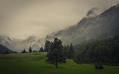 Valley of Trettach (Netsrak) Tags: alpen baum europa landschaft natur nebel trettachtal wald fog mist