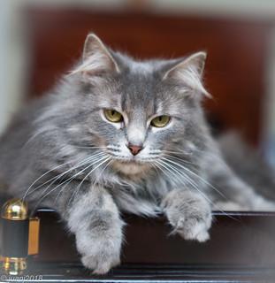 Sassy the Cat