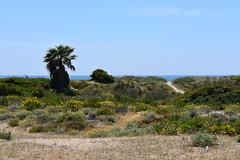 Delta del Llobregat (esta_ahi) Tags: deltadelllobregat gavà lesmalloles flora costera dunas baixllobregat barcelona spain españa испания costa marítima arenalescosteros
