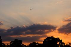 Shuttleworth sunset and Mew Gull.         Beautiful crepuscular rays. (rac819) Tags: oldwarden flyingevening shuttleworthcollection shuttleworth vintageaircraft flying sunset cloudsstormssunsetssunrises crepuscularrays crepuscular weather clouds