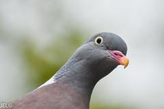 DSC_0077 (whotneckst) Tags: nikond7200 nikkor300mmafed kenkox14 birds