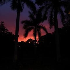 Sarasota Sunset (soniaadammurray - On & Off) Tags: digitalphotography sunset trees nature sky nighttime quartasunset artchallenge exterior