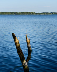 Am Plöner See (Professor Besserwisser) Tags: plönersee plön ploen ploenersee schleswigholstein norddeutschland kreisplön d3400 nikond3400 groserplönersee see lago lake northerngermany alemaniadelnorte landschaft landscape paisaje
