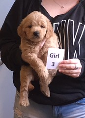 Lucy Lu Girl 3 6-17