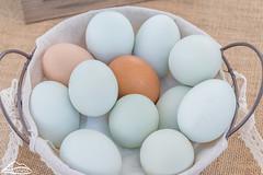 Chicken eggs in basket (Washington State Department of Agriculture) Tags: farmersmarket georgewashington grantcounty june summer washingtonstatedepartmentofagriculture agriculture eggs spring washington washingtonstate