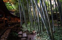 Green Tea & Bamboo forest (Andreas Mezger - Photography) Tags: bamboo forest green tea greentea landscape old tall beautiful wood japan asia kamakura