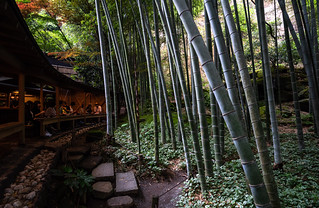 Green Tea & Bamboo forest