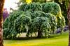 From the horticulture museum (Birgit F) Tags: 2018 lensbaby norway velvet56 dømmesmoen grimstad juni photobirgitfostervold seeinanewway