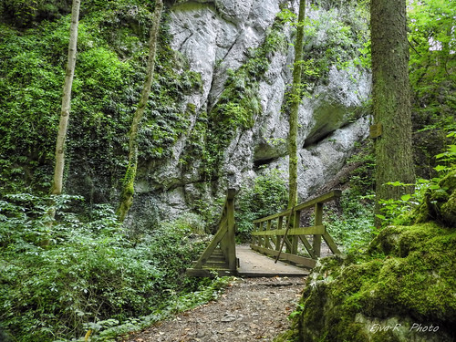 Dzsungel az Alpokban
