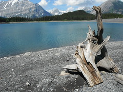 K Country Southern Alberta Canada (Mr. Happy Face - Peace :)) Tags: flickrfriends flickrfriday scenery forest landscape art2018 mountains lake hiking albertabound cans2s wilderness nature canadaparks yyc summer kananaskis