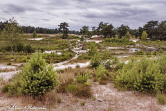 20180623-4333-Brunssummerheide-bw (Rob_Boon) Tags: brunssummerheide colefpro4 landschap roodebeek robboon landscape limburg netherlands heath pine tree lake
