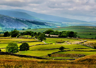 Ribblesdale meadows