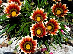 Dobral de São Miguel (António José Rocha) Tags: portugal beira baixa flores sobraldesãomiguel umaaldeiaflorida cores beleza luz natureza
