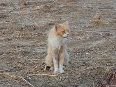 Pefkos Cat (deltrems) Tags: greek greece rhodes rodos pefki pefkos pefkoi island hellas animal kitten cat puss pussy pussycat feral feeding station area