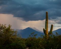Arizona Mountain Rain (Kyle French) Tags: arizona az tucson rain monsoon desert cactus landscape weather