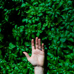 Reaching for you (The Remy & Nate Collection) Tags: concept hand hands green lush nikon naturallight natural nature art fine daylight daytime day summer reach plants plant woods wilderness