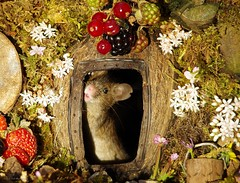 George the mouse in a log pile house standing at door (1) (Simon Dell Photography) Tags: noticed mouse base garden tree built him small log pile gave it door now 3 mice have moved pop out daily pose for photo we called male george his wife mildred cute animal wild wildlife nature moss logs wood summer flowers berrys berries rodent uk england old english country cards posters fun funny awesome detail close up tame simon dell photography sheffield shirebrook valley s12