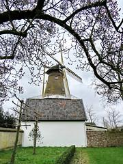 underneath the magnolia (Mattijsje) Tags: windmill windmolen de hoop hope loenen nederland netherlands holland city village tree trees boom bomen wilg willow