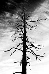 Memento Mori (YogiMik) Tags: sinister feel memento mori spooky bw black 6 white tree dead sky grain yogi mik norway 2015