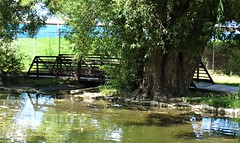 71818-07, Bridge Across The Water (skw9413) Tags: newmexico bridge tree pond