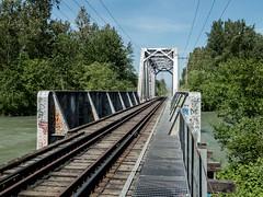P1090503 (Copy) (pandjt) Tags: bc britishcolumbia travelogue chilliwack chilliwackbc greatblueheronnaturereserve heronreserve chilliwackriver chilliwackriverrailwaybridge vedderriver vedderriverrailwaybridge bchydrorailwaybridge southernrailbridge steeltrussbridge steeltrussrailwaybridge railwaybridge