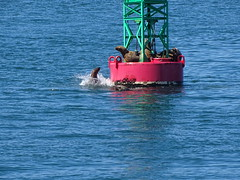 DSC03652 (jrucker94) Tags: juneau alaska cruise cruiseport seal seals buoy ocean inlet red green