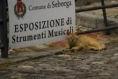Bad Looks (Matt Pi) Tags: eyes village lguria italy italia photo cats kitten scene pics animals love sunny day seborga trip travel lights portraits