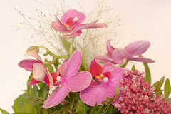 Tender as an orchid (MR-Fotografie) Tags: flower blume orchid orchidee pink rosa nikon d7100 nikkor 50mm mrfotografie