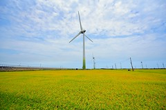 wind power turbines in the rice farm (chsyang) Tags: wind power green energy rice golden turbines