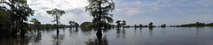 Uncertain - Caddo Lake Panorama (Drriss & Marrionn) Tags: uncertain uncertaintx texas usa outdoor landscape landscapes caddolake lake water tree trees cypresstree reflection green spring tillandsiausneoides spanishmoss forest woods river canals panorama pano sky