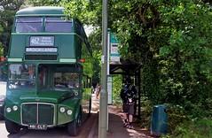 London transport Greenline RMC1461 Weybridge station 24/06/18. (Ledlon89) Tags: london bus buses transport lt lte londonbus londonbuses londontransport vintagebuses brooklands weybridge londonbusmuseum