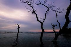 Ending day (Dingo photography) Tags: sea trees dramatic uwa tamron1530mm tamron d750 nikon goldenhour sunset sun landscape seascape