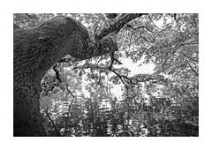 Waves (memories-in-motion) Tags: waves water bark tree vulkaneifel black white blandwhite totenmaar weinfeldermaar maar eifel mood riverside daun light shadow leica q leicaq