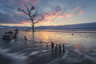 Still standing...  Capers Island, South Carolina