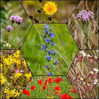 bloemen_dijk_collage2