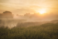 Summer Mist (Vemsteroo) Tags: mist fog atmospheric morning sunrise dawn summer trees landscape ethereal canon 5d mkiv 2470mm warwickshire river riveravon foggy misty outdoors exploring travel