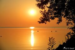 Lever du soleil ce matin 6h00 (jean-daniel david) Tags: nature soleil leverdesoleil sunrise arbre orange or reflet réservenaturelle yverdonlesbains suisse suisseromande vaud oiseau cygne aube