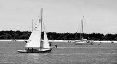Sailing (pjpink) Tags: blackandwhite bw monochrome beaufort northcarolina nc carolina crystalcoast may 2018 spring pjpink 2catswithcameras