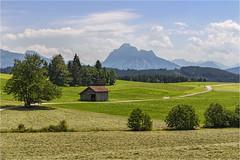 Blick zum Säuling (Robbi Metz) Tags: deutschland germany bayern bavaria alpen voralpen hiking landscape mountains trees forest barn grassland colors canoneos