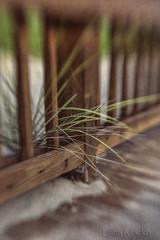 Beachwalk fence (LanaScape Photos) Tags: sand lensbaby hff fence fencefriday happyfencefriday blur texture