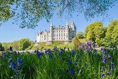 Dunrobin Castle (Gordon Mackie) Tags: dunrobincastle golspie sutherland northcoast500 nc500