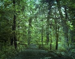 Bosque (Jaime Villaseca) Tags: nature forest 4x5 linhof