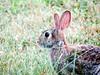 IMG_5539 (kennethkonica) Tags: nature birds animalplanet animal animaleyes autumn canonpowershot canon usa america midwest indianapolis indiana indy color outdoor wildlife