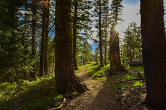 I'll Follow the Sun (kirstenscamera) Tags: pacificcresttrail outside norcal california forest sunshine light rays nikon d810 path trail pct mountshasta siskyoucounty shastacounty shastatrinitynationalforest outdoors woods trees landscape nature ca shadow goldenhour