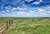 Cattle Bazaar - Flint Hills (gpeier) Tags: agriculture america cow farm grantpeier green kansas lake nature pond rural usa water flint hills tallgrass prairie grass cattle sky clouds
