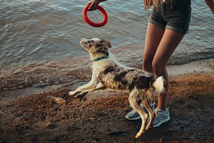 Zara (Margarita Shalak) Tags: border collie nature pet animals dogs forest river friends