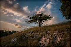 Das Abendlicht macht einen anderen Himmel (linke64) Tags: thüringen deutschland germany natur landschaft bäume baum himmel wolken abend licht