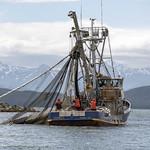 Osprey Salmon Chilkats 601 thumbnail